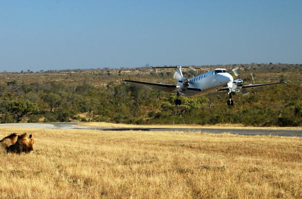 Bush airstrip landing in the Kruger National Park.
