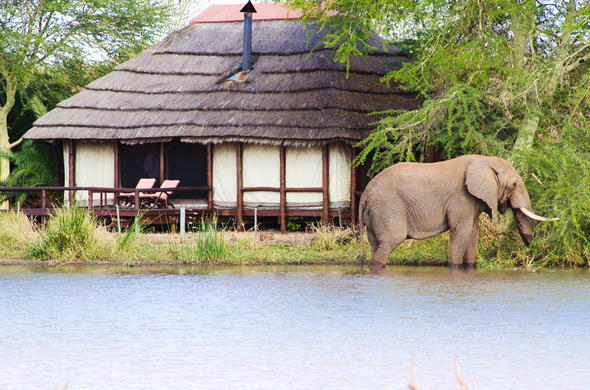 Watch elephants walk past your water-front accommodation.