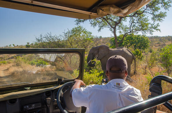 Game drive in the Kruger National Park yields and elephant sighting.