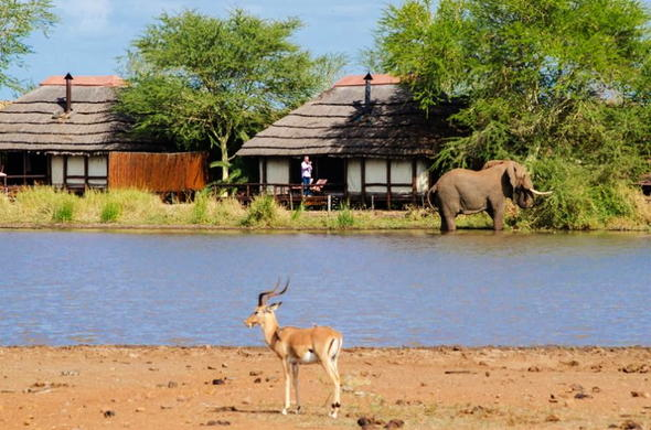 Watch passing by wildlife from your classic Kruger safari lodge.