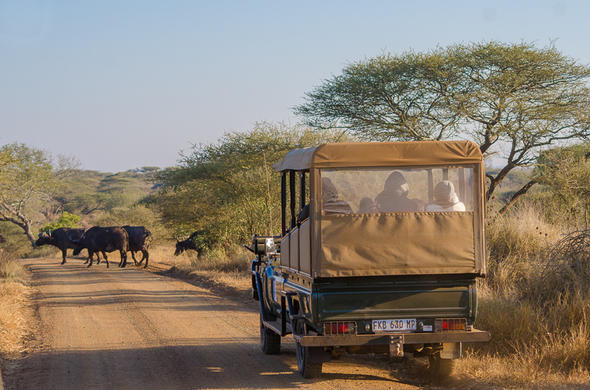 Game drive in the Kruger National Park.