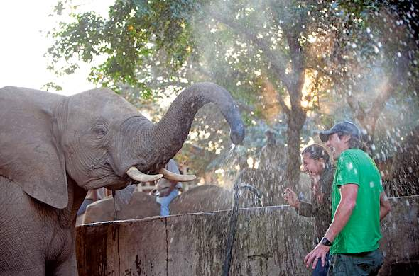 Elephant spraying guests during elephant interaction in Hazyview.