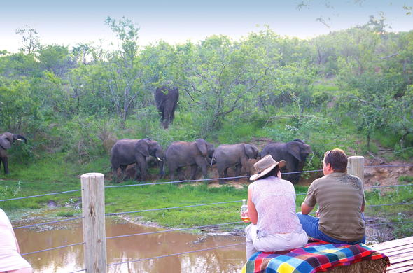 Elephant interaction in Hazyview along the Sabie River.