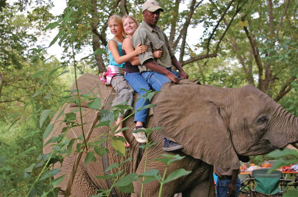 Kids on elephant back ride through the bush.