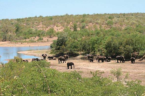 Elephants near Palaborwa Gate