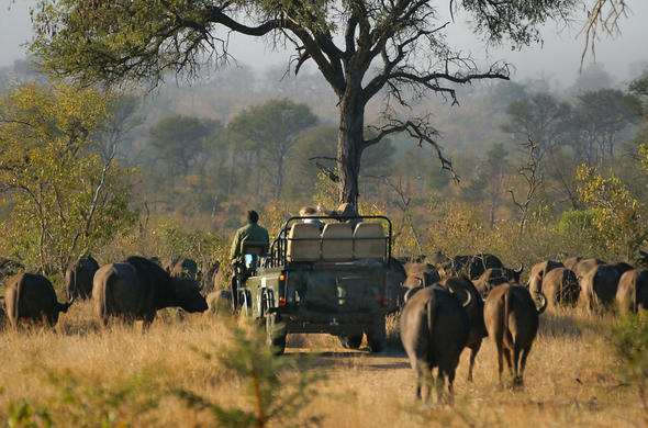 Game drive with buffalo
