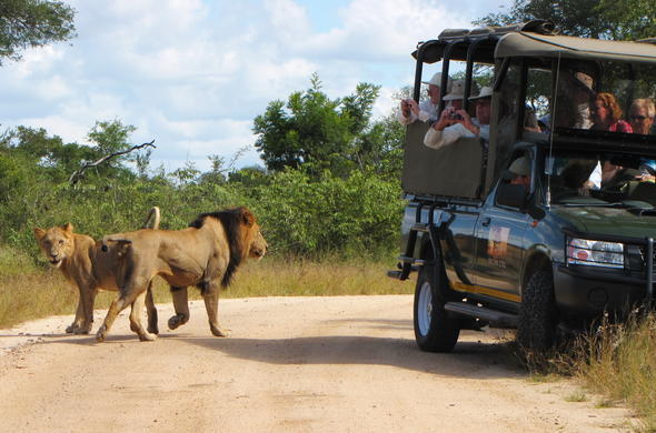 Full Day game drive in Kruger National Park.