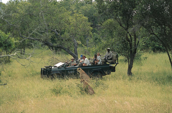 Game Drives | Kruger National Park | Travel Advisory...