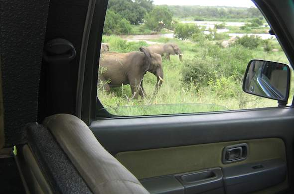 Guided Game Drives in Kruger National Park.