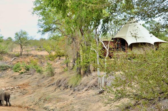 Watch passing by wildlife from your tented accommodation in the Kruger National Park.