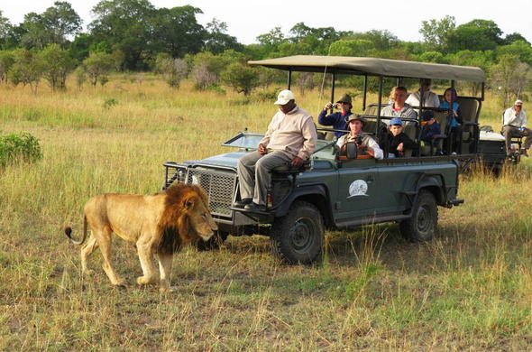 Family safari game drive in Kruger National Park.