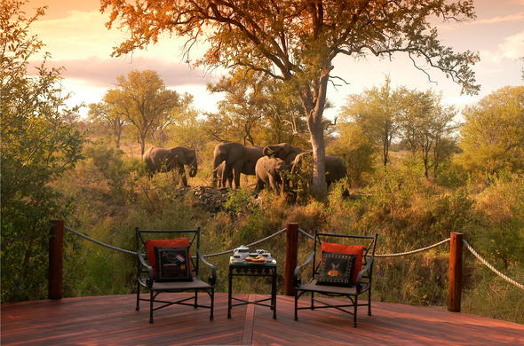 View elephants from the game viewing deck at Hoyo Hoyo Safari Lodge.