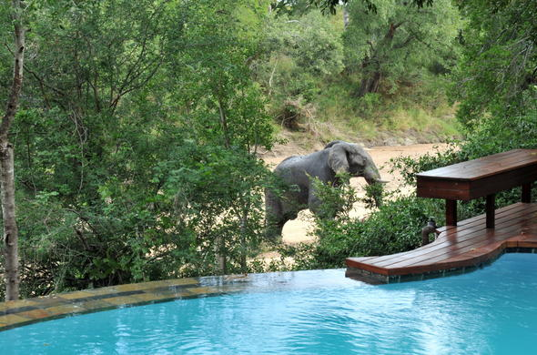 Game viewing from the pool at Imbali Safari Lodge.