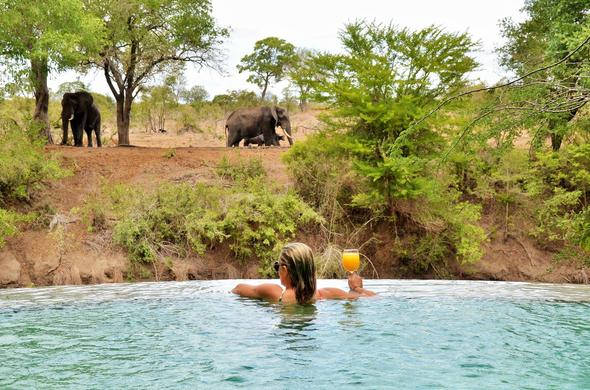 Watching passing by elephants from the pool.