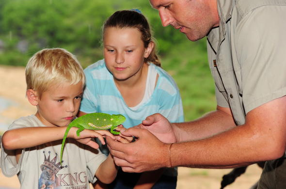 Kids supervised interaction with a chameleon.