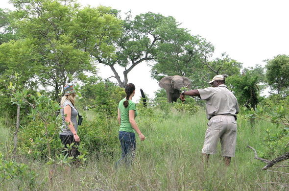 Walking safari with a qualified guide in the Kruger National Park.
