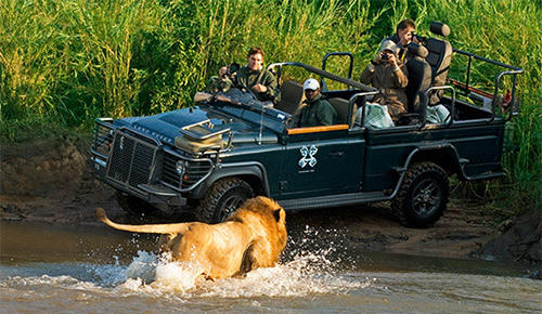 Kruger National Park game drive.