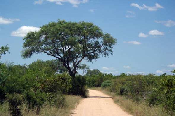 Dirt road in Kruger Park.