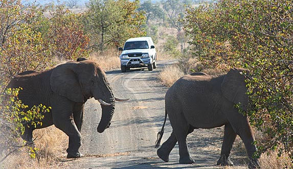 Getting around Kruger Park