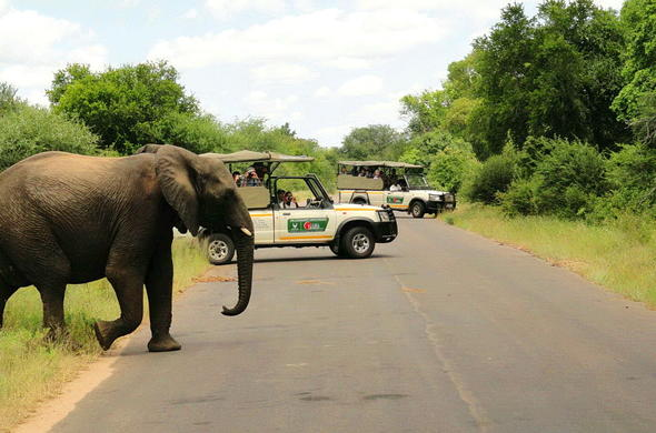 Guided game drive in Kruger National Park.