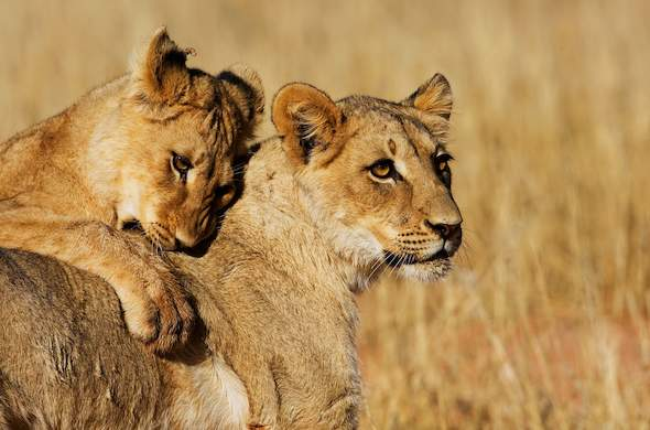 Popular Kruger Park Safaris featuring wildlife.