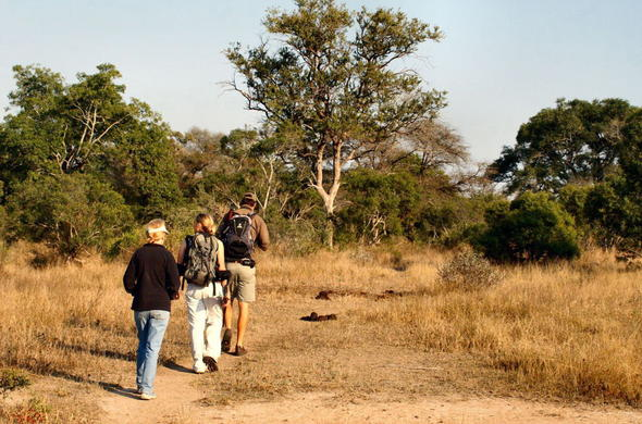 Guided walking safari in the Kruger National Park.