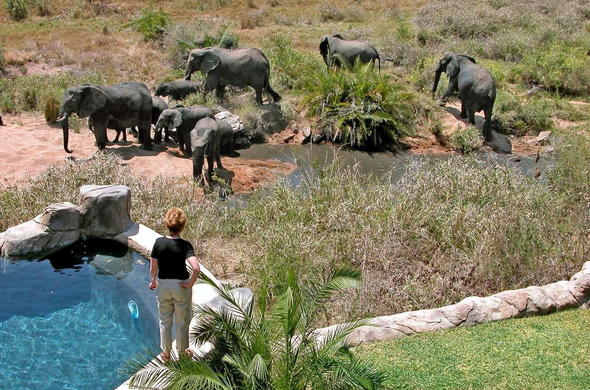 Observe elephant at the waterhole of Lukimbi Safari Lodge.