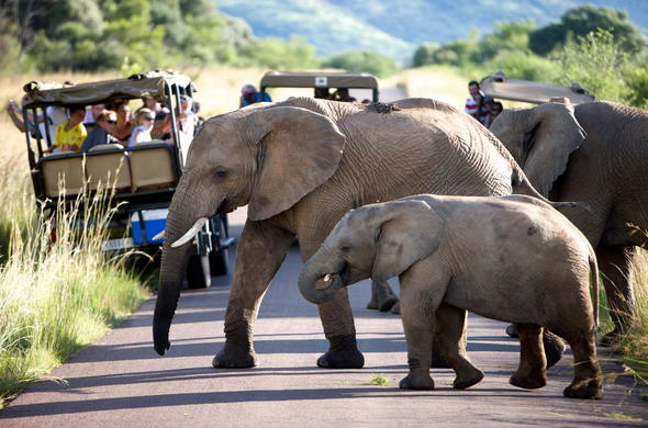 Elephant sighting during Kruger Park Safari.