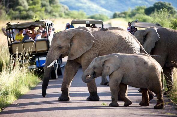 Image result for Kruger Park Safari: A memorable Event