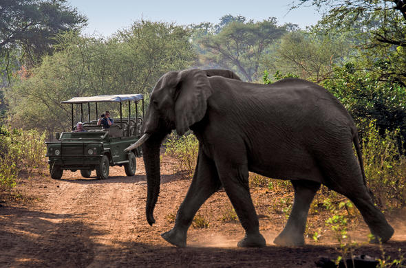 Elephant sighting during a game drive in the Kruger Park.