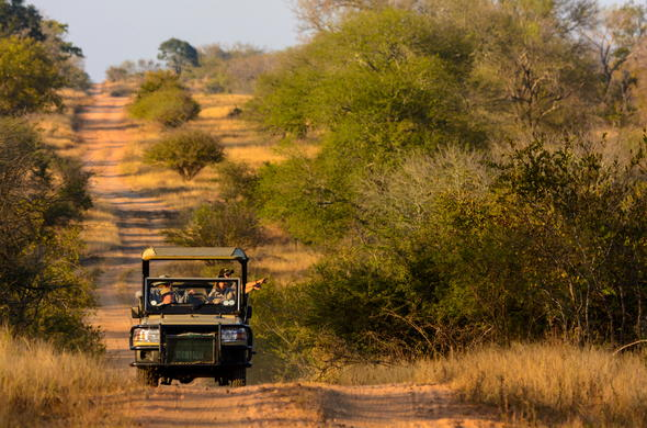 Game drive through the Kruger Park bush.