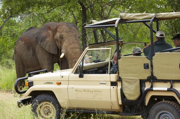 Elephant sighting during a game drive in Kruger.