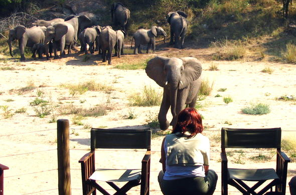 Watch elephants from the game viewing deck at your Kruger Park safari lodge.