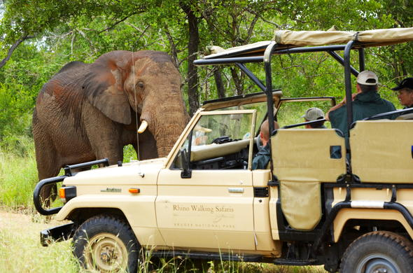 Elephant sighting during a Kruger Park game drive.