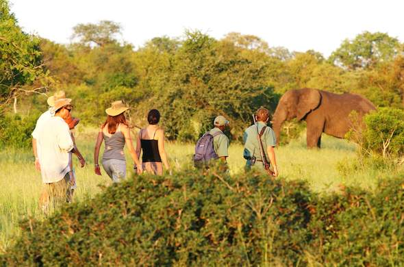 Walking safari tour in Kruger National Park.