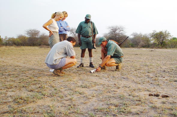 Tracking wildlife during a Kruger Park walking safari.