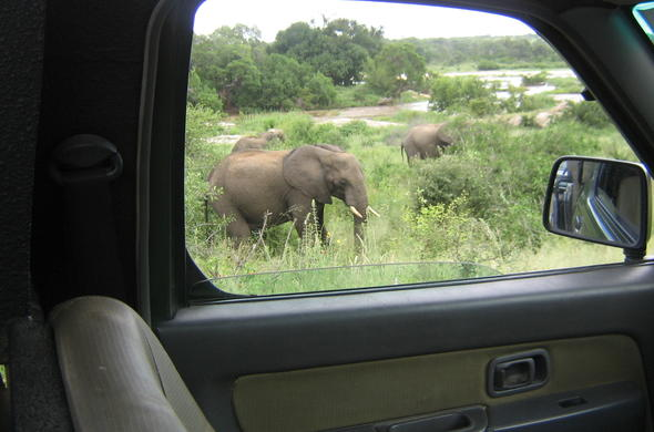 Self-drive safari in Kruger National Park.