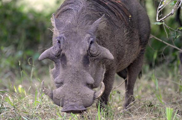 Kruger Park Wildlife Facts